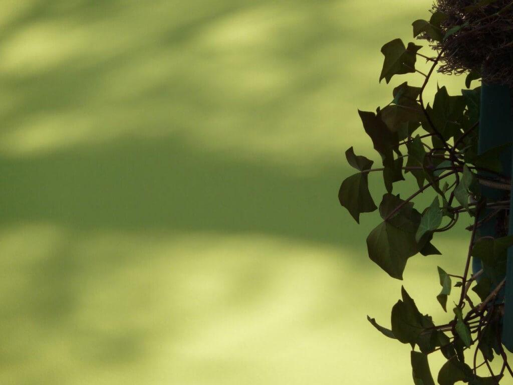 green eco promotion les jardins de brunoy